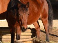 Kali alias Québec, 12 ans un vrai coquin de poney!