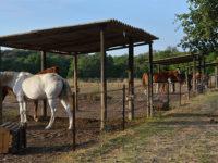chevaux au paddock individuel ou à 2